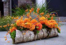 Butuci cu flori