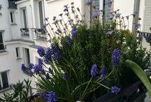 Jardinage appartement / #appartmentgarden