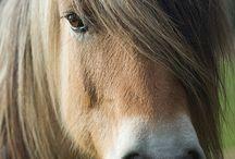 atlar