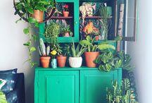 Vetrina con piante