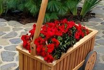 nápady záhrada