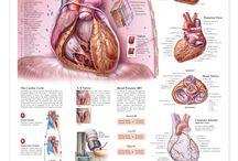 The Amazing Heart <3