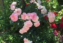 MARGOT FLOWERS