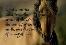 Beautiful Horse pics and quotes