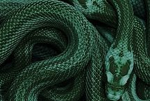 hp | slytherin
