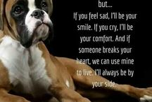 Honden boxers