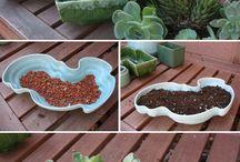 ZÖLDség / Növényes szépségek, most már egy naaagy parlagon heverő kertbe :)