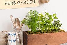 Plants/Garden/flowers