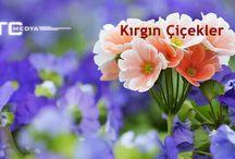 Kirgin cicekler❤❤ / KIRGIN CICEKLER-ZOES PARALLILES❤❤❤
