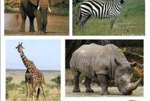 animaux jungle
