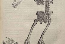 Bones and such