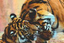 Animals, nature...