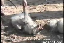 Animal abuse the world ignores because we sold out to China! And the other barbaric countries that allow it! / by Holly Tate