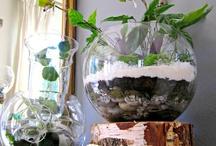 Cool plants I love