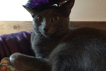 Pet Halloween Outfits! / Pin a photo of your pet in a crazy Halloween costume or one that you have found online! / by Kristi Ford