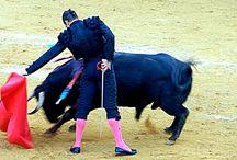 El mundo del toro. / Manzanares. Sanlúcar de Barrameda.