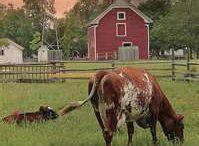 FARM Fresh/ Blue Ribbon at the County Fair / All things down on the farm. / by Marisa Doan