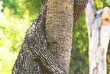 Amazing Trees /  Strangely shaped trees