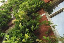 Groene daken/groene gevels. / Je kunt nu ook verticaal tuinieren. Bekijk prachtige foto's van planten tegen gevels en schuttingen.