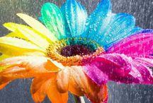 Awesome Gerbera Flower