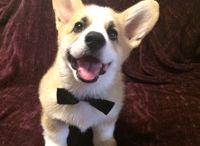 Sir Duke of Corgalot / The adventures and misadventures of Sir Duke the Pembroke Welsh Corgi.