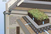 tanaman atap