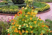 jardim especiarias, ervas medicinais e aromaticas