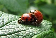 Ladybug, ladybug fly away home.....