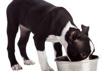 Dog food / Pets