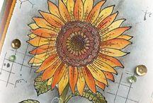 Coloured by Jenine - Pencils