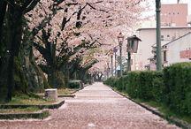 Springー春 桜