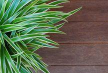 plantas que purificar o ar