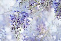 zahrada, kvetiny  dekorace...