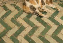 ^CATS