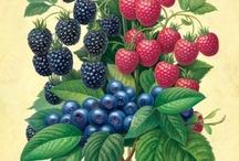 owoce zioła