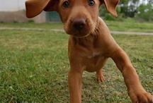 i don't want a dog, but love pictures of cute ones / by Laurie Bohannan