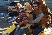 Hunde auf Mopeds die Spaß machen
