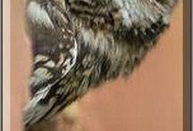 Owls 2.