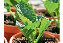 pflanzen vermengen/stecklinge