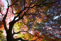 4 seizoenen herfst