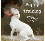 Puppy / by L'Rona O'Brien