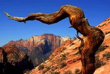 Southern Utah Is Amazing / I can't get enough of places like Zion, Bryce, and the Grand Staircase/Escalante