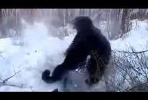 Охота на медведя окончилась трагически Медведь хищник Huge Bear predator