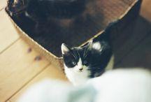 Gatos / Minha grande paixão: gatos!