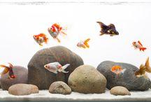 akváriumok / akváriumok