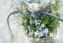 Blommor / Snitt och balkongblommor