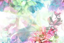 flowers + Effects