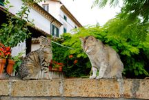Cats of Italy