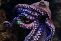 Underwater / Mammals fish and reefs