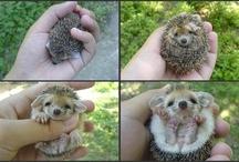 Furry Babies / by RichmondMom